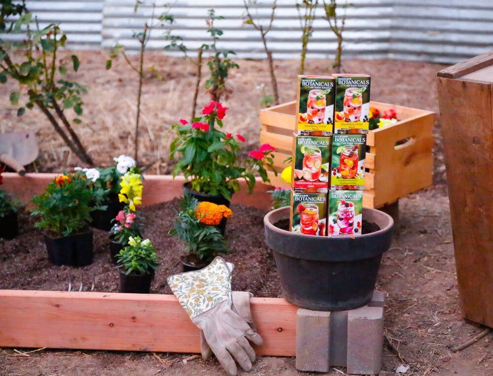 Bigelow Botanicals Cold Water Infusion, Water, tea, Gardening, flowers, vegetable garden, flower beds, Hydration, healthy activities